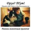 Краснознаменский приют для собак