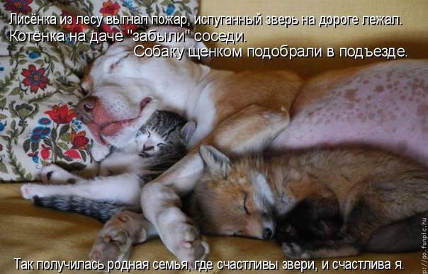 https://cs7062.vk.me/c7001/v7001773/1210f/M6gvJVjwOc4.jpg