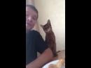 Кошка и хозяин.mp4