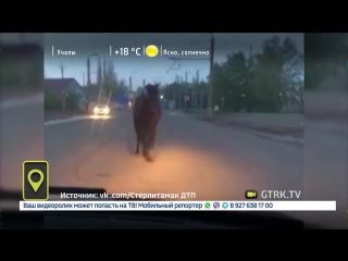 По улицам Стерлитамака разгуливала лошадь (видео от 21.05.2018 года)