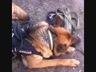 cheshir_dog+InstaUtility_1e678.mp4