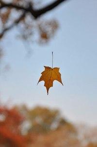 Отцвели цветы, падают листья, птицы молчат, лес пустеет и затихает.ОСЕНЬ. - Страница 6 3lLHnfmsCfY