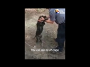Полицейский нашел в лесу 72 голодные собаки, которых использовали в боях