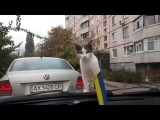 Супер прикол!!! смешная реакция кота!!!!!
