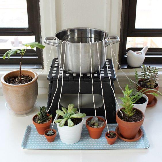 чтоб комнатные растения не завяли во время длительного вашего отсутствия дома (источник: gofazenda)