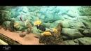 Музей-аквариум ИБВВ РАН имени И.Д.Папанина