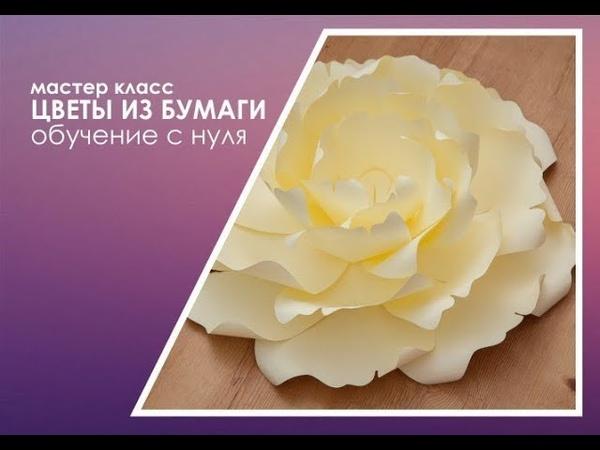 Бесплатный мастер-класс по созданию Бумажных цветов с пушистыми серединками