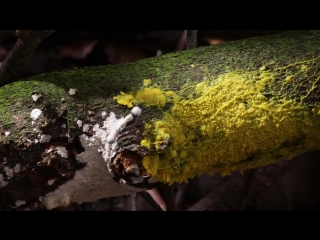 What self-driving cars can learn from brainless slime mold