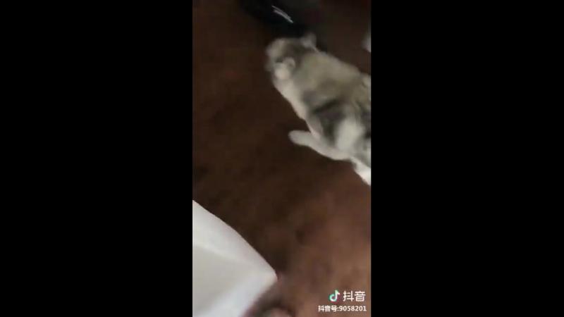 как воспитывать животных