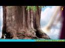развивающие мультфильмы про природу