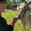kira_tarasova video