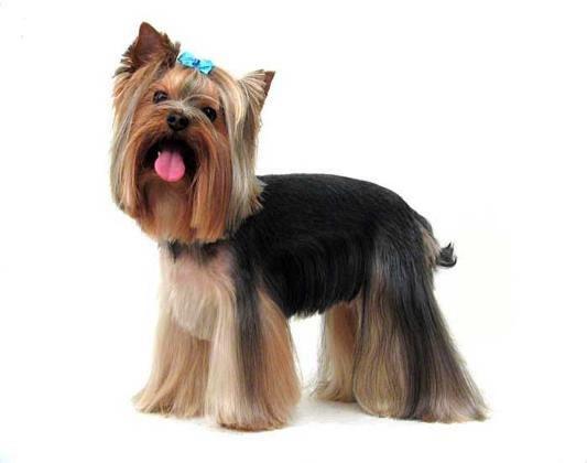 Стрижки для собак