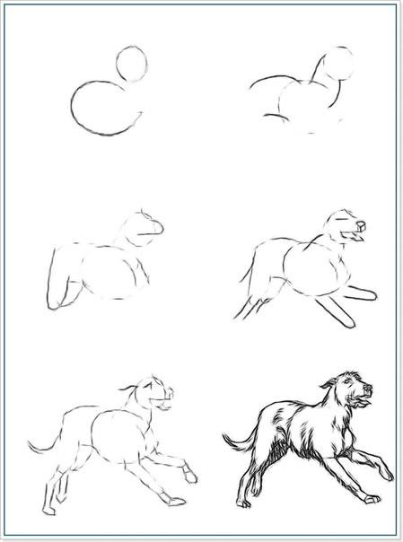 Рисуем лошадей.  Раскраски домашние животные.