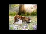Человечность зверя _ До слез трогательный ролик _ ВОЛК Wolf Life