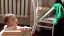 Девочка Настя играет с милым котиком Nastya plays with a cute kitten