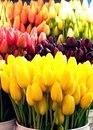 Это будет лучшая весна.