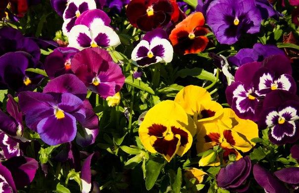 ???? Какие растения посадить и посеять в мае...