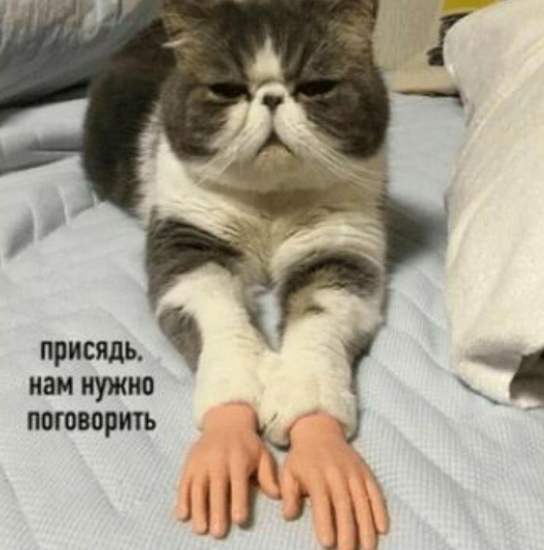 Поиздеваться над котом - святое)