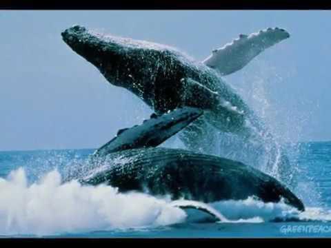 Плачь китов Жан Мишель Жаре