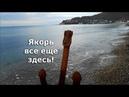 Центральный пляж Архипо-Осиповки / Море 5 декабря / Альбатрос