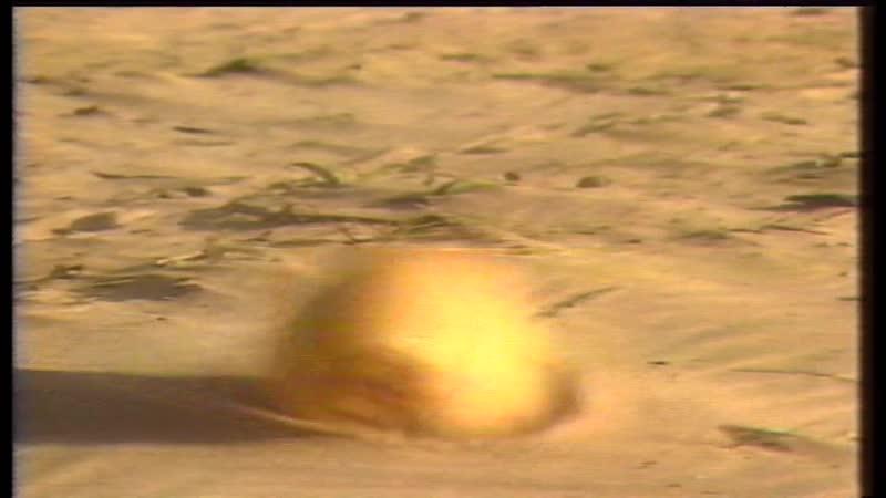 Laid Back — Sunshine Reggae = Bild - Hit-Clips Der 80er