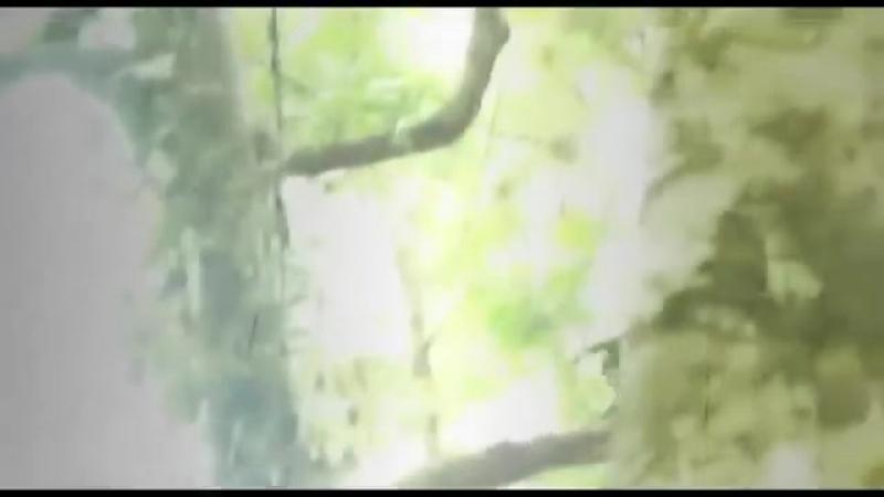 Эбу-гого, съёмка за 1977 год (часть 1, приближено и замедлено)