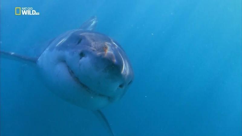 Соединённые штаты акул - [Full HD 1080i]