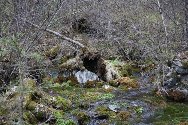 Дерево поселилось на камне, а ручеёк вывернул всё здесь.