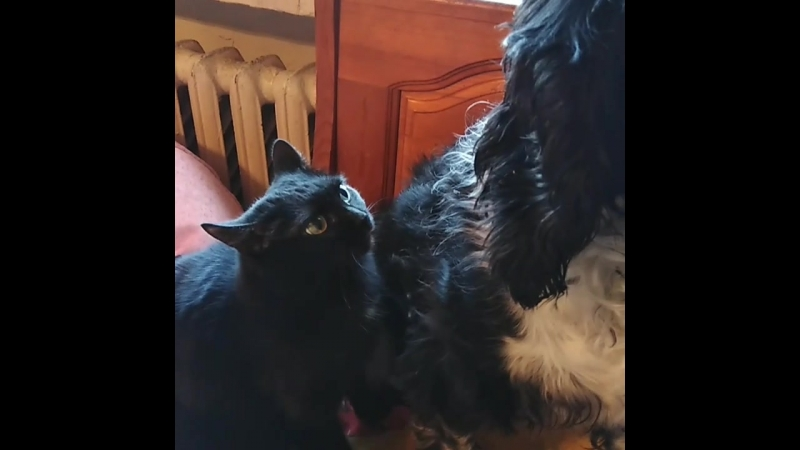 животныевдоме нападениекошки сat dogsofinstagram dogs моилюбимки😍😘