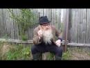 Психология Дед Архимед. Песенка про жопу