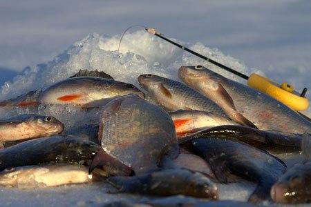 Студент живёт от сессии до сессии, а рыболов - от пятницы до воскресенья!)