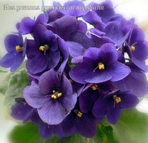 10 растений, которые принесут в ваш дом любовь 1. Спатифиллум (известен еще как Женское счастье). Принеся это растение в дом, одинокие люди обязательно найдут свою вторую половинку. У молодых