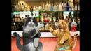 Анекдот от кота Миши про Монголию
