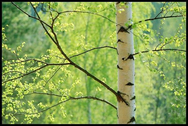 зодиак - Магия растений. Магические свойства растений. Обряды и ритуалы. Амулеты и талисманы из растений.  - Страница 2 SGoWUn2hBC0