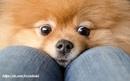 Лучшее, что есть у человека, - это собака.(Туссен Никола Шарле)