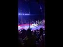 Цирковой крокодил из Чувашии сбежал от дрессировщика к зрителям