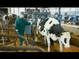 Шведская молочная ферма. - Суки, как-то все же они очень уж успешно загнивают.
