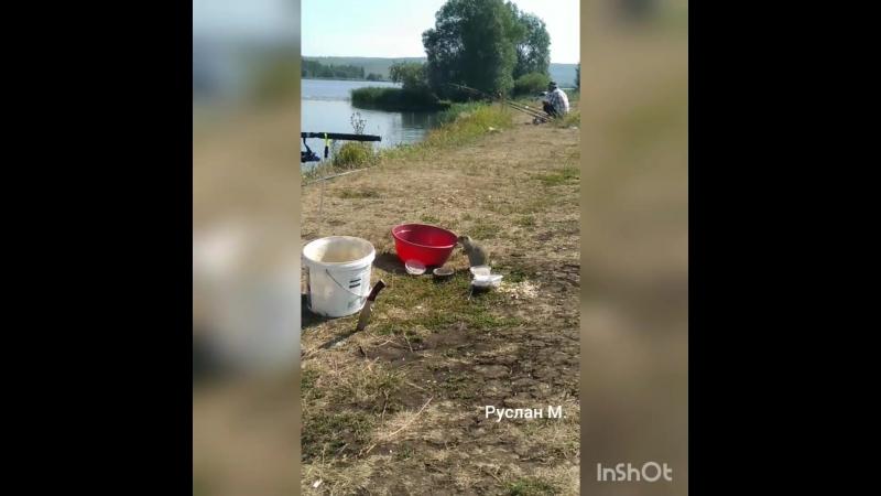 суслик Рыбнадзор