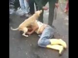 Мир вокруг нас - Преданная собака помешала разгневанным...