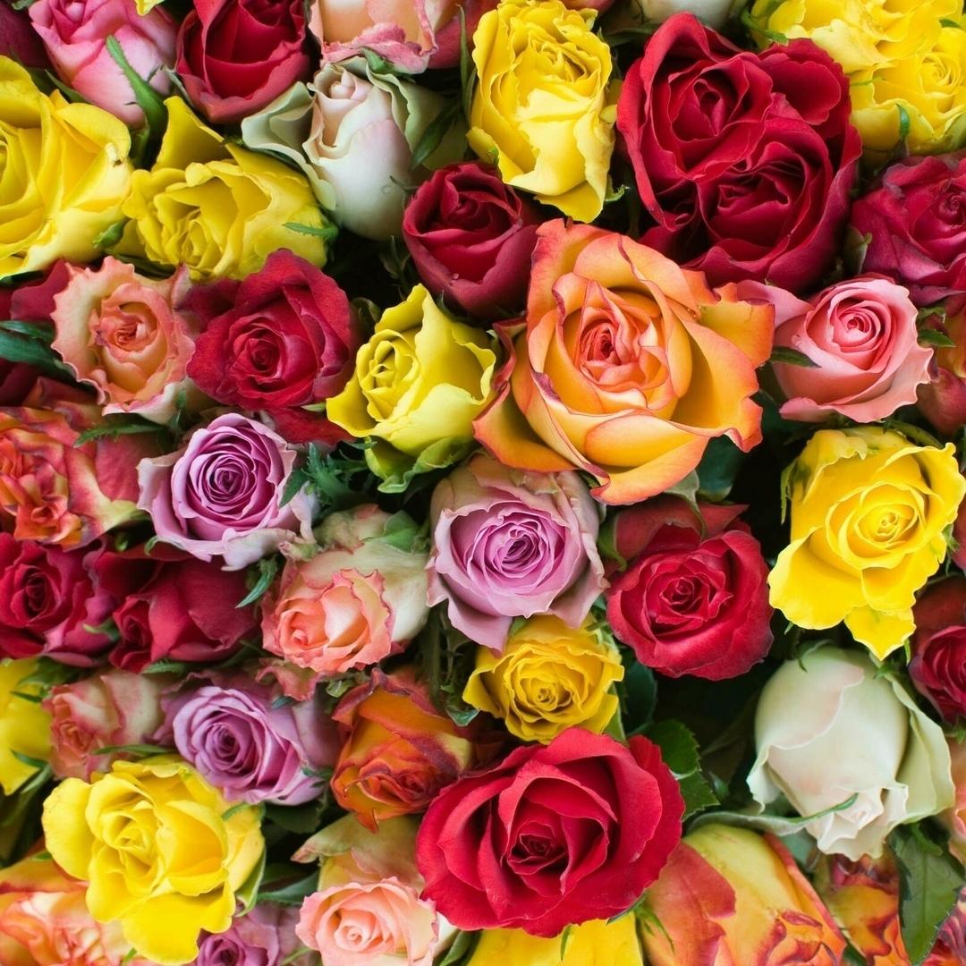 Букет розы Футер с лк 95% хл+5%лк 240г/м2 180см