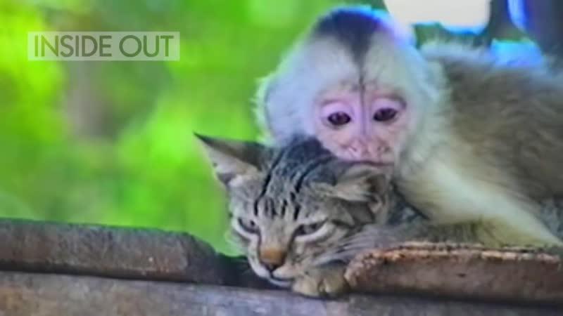 Миленькая обезьянка и терпеливый кот