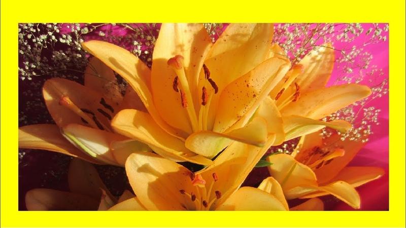 Волшебные цветы лилии Этот прекрасный мир🌺 🌸