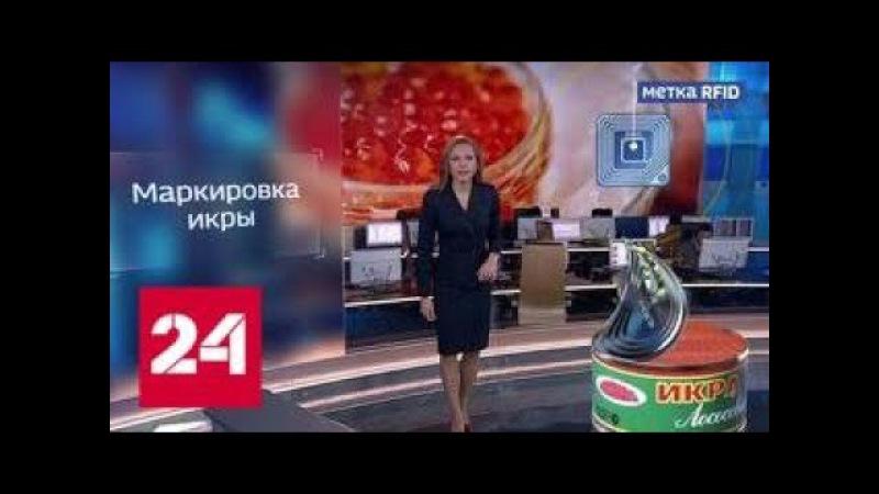 Черную и красную икру защитят от браконьеров маркировкой - Россия 24