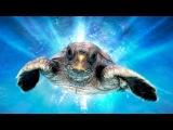 Большое путешествие вглубь океанов: Возвращение 3D / Turtle: The Incredible Journey 3D (2009)