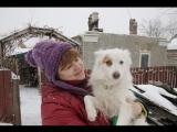 Собака - друг человека, Октябрьский