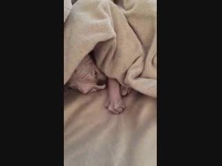 Слишком холодно, чтобы вылезать из-под одеялка