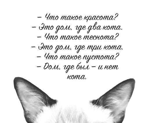 Коты для хорошего настроения PIoYcwlkcCI