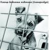 Помощь бездомным животным (Екатеринбург)
