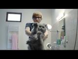 Как помыть кота с помощью браузера и полотенца