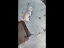 когда на улице сыро и даже собака не хочет гулять 🌝💕